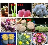 Free shipping 1 Pack (100 seeds mixed) Lithops flower seeds perennial for home stone flower