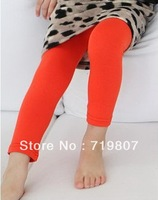 Free shipping 2013 ploughboys autumn candy color wool lycra legging 5 pieces/lot