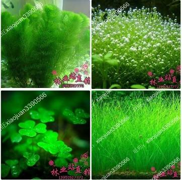mixed 200 seeds/pack Plants fish tank aquarium decoration grass seed aquarium plants seeds(China (Mainland))