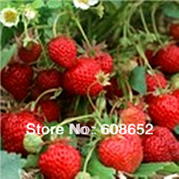 Strawberry (Season 4) vegetables watermelon and melon seeds (seeds) 50pcs / pack home garden free delivery