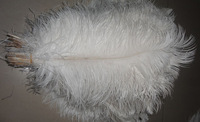 35-40cm/14-16inches natural ostrich feather /plumage for wedding centerpieces DIY feathers  Free Shipping