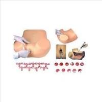 Gynecological  examination Training Simulator,Midwifery training medical model type