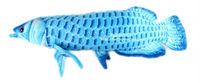 Free Shipping! Gold Arowana 67 cm super size plush big fish cartoon plush toys stuffed animals cushion kids toys long pillow