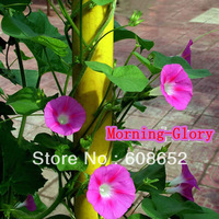Farm - Morning Glory (seeds) of vegetables, flowers, fruits - seeds / bag Home Garden - Free Delivery