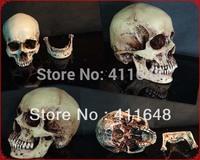 NEW Medical Skull High Simulation 1:1 Skeleton Human Skull Head Model Human Head Resin Craft Decoration Free Shipping