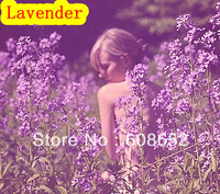 Lavender (seed) of vegetables, flowers, fruits - seeds / bag Home Garden - Free Delivery