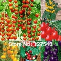 10 Bag Tomato Seed 20pcs Tomato Vegetable Fruit Lycopersicon Esculentum 10 color you can choose Free shipping