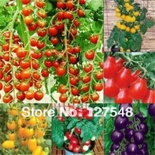 1Bag Tomato Seed 20pcs Tomato Vegetable Fruit Lycopersicon Esculentum 10 color you can choose(China (Mainland))