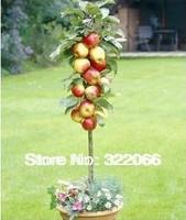 Free Shipping 30pcs/Lot  Bonsai Apple Tree Seeds RED APPLE TREE * VERY FRAGRANT, SWEET, CRISP * GARDENING SEEDS *