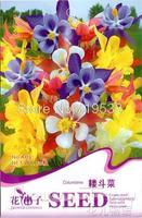 1 Pack 50 Seed Columbine Flower Seeds
