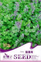 1 Pack 50 Seed Catnip Seeds