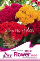 1 Pack 100 Seed Mix Color Cockscomb Celosia Cristata Flower Seeds