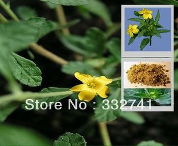 Free Shipping ISO&Kosher Male Stronger Turnera Diffusa Damiana Extract Powder