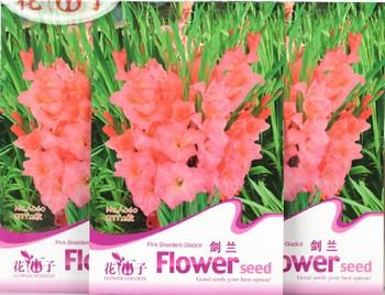 TOTAL 5 PACKSGLADIOLUS 1 ORIGINAL PACK ABOUT 2 SEEDS * SWORD LILY GLADIOLUS WIHT VERY BEAUTIFUL PINK FLOWERS * PLUS