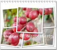 Free shiping 500g Gaoligongshan mountai zhaizi green bean coffee Yunnan China arabica platce