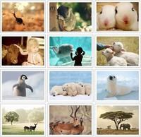 Free Shipping! bentoy Nature Animals postcards/Christmas Card/Greeting Card/32 pcs/set Postcard Gift