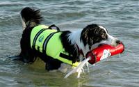free shipping Pet paws aboard dog life vest safety clothing dog swimwear