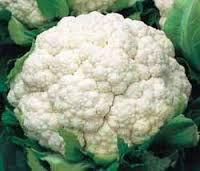 Cauliflower SEED 100PCS/BAG Vegetable seeds