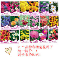 A variety of chrysanthemum seeds flower bonsai flowers and plants 24 types original packaging 24 packs