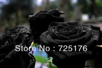 Free shipping 200 pcs China Rare Black Rose Flower Seeds