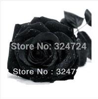 200PCS/PACK Freeshipping black rose seeds  rose seed black rose flower seeds retail/ wholesale