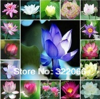 10color mix flower pots planters flower seeds Lotus Seeds, Nelumbo Lotus Seeds, Germination rate 95% lotus seeds,garden bonsai