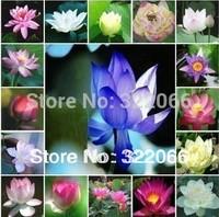 10color mix flower pots planters flower seeds Lotus Seeds, Nelumbo Lotus Seeds, Germination rate 95% lotus seeds,garden bonsai