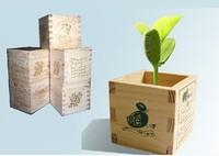 20 pcs /lot  Magic Bean White English Magic Bean Bonsai Green Home Decoration