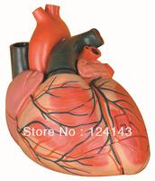 Heart model 3parts