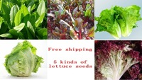 Free shipping 5 kinds of lettuce seed, 5 packs of more than 430 seeds