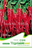 red line red pepper 30 seeds c011 indoor bonsai flower plant