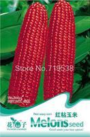 Red sticky corn seeds - 10seeds b044 nutrition
