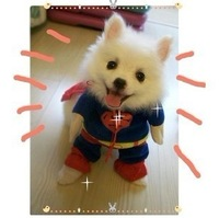 Pet dog super man clothes pet super man loading dog turned installed super man loading dog clothes