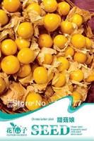 Free shipping 150 Physalis alkekehgi seeds,,Hydrangea plant seeds,original pack seeds