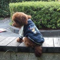 Spring sports dog clothes casual pet clothes clothing teddy 015