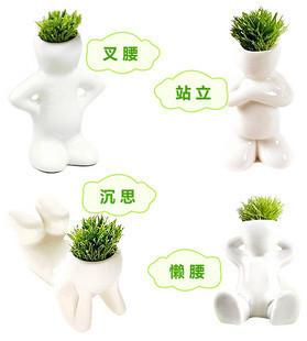 4pcs/lot Small bonsai grass mini plant office desktop potted little white man All sortsattitude to Alleviate the pressure(China (Mainland))
