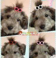 Pet Supplies Pet Sunglasses Hairpin Dog Hair Clip Pet Head Flower Pet accessories