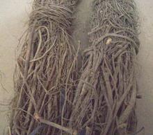 wholesale rattan plant