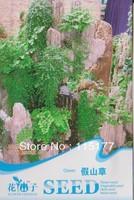 Free shipping 150 Clove seeds,,Hydrangea plant seeds,original pack seeds