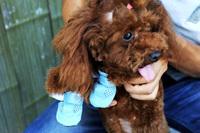 Free shipping cute slip waterproof pet shoes sports shoes lightweight plaid Hot Teddy Bichon