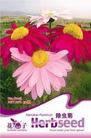 1 Pack 50 Seed Dlamation Pyrethrum Seeds Flower Seed Hot D018