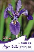 1 Pack 5 Seed Beautiful Lovely Blue Lris Flower Seeds Lris Tectorum Hot H002