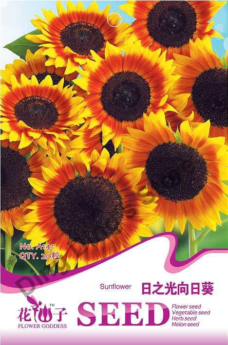 plantio de rosas em jardim: de-belo-jardim-sementes-de-flores-sementes-de-girassol-para-o-plantio