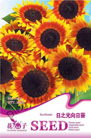 10 bags 200 pcs of beautiful flower seeds garden sunflower seeds for planting