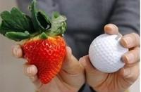 100 Seeds red fruit strawberry seeds DIY Garden Fruit Seeds