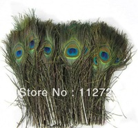 Free Shipping 25-30cm 10-12 inch peacock Feather 500pcs/lot  wholesale performance  Plumes Peacock plumes