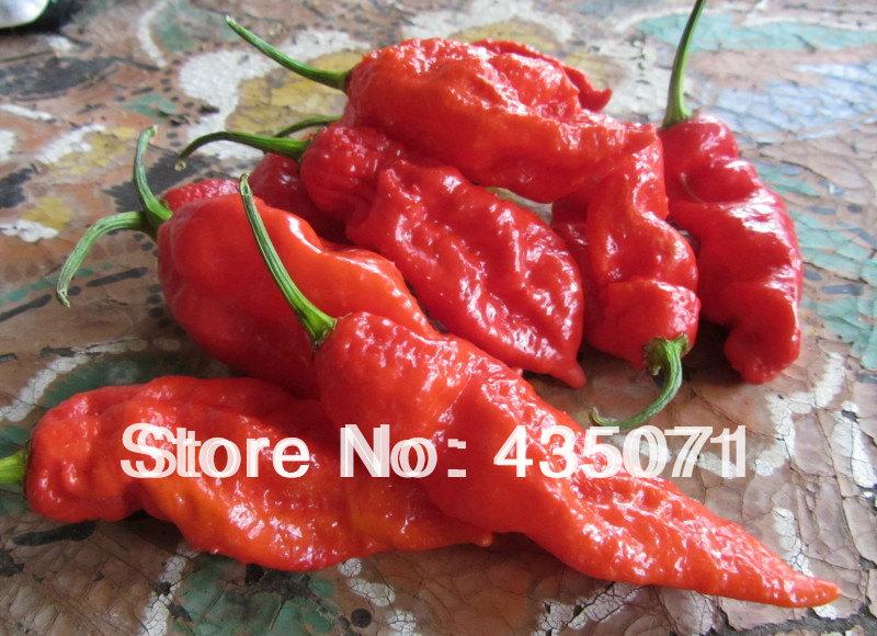 Buy Bhut Jolokia Pepper Pepper Seeds Bhut Jolokia