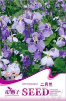 1 Pack 500Seed beautiful violet orychopragmus flower seeds