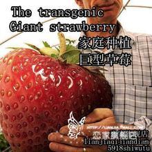 diy fruit price