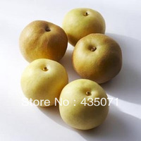 Organic Heirloom 100 Seeds / bag Chinese Pear Pyrus ussuriensis Ussurian Pear Hardy Fruit Tree Edible Fruit Seeds